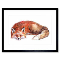 Fox Sleeping Watercolour Framed Wall Art Print 12X16 In
