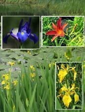 Rosennymphe blühende Pflanzen Schwimmpflanzen Deko Dekotipps für den Gartenteich
