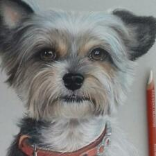 Portrait commission drawing from your photo reference pet custom painting