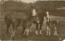 HORSES and FOALS Vintage Equine Photo PC to Denny 1912