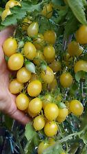 10 graines de tomate rare Barry's Crazy Cherry excellente très productive m.bio