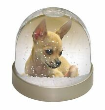 Chihuahua Photo Snow Globe Waterball Stocking Filler Gift, AD-CH31GL