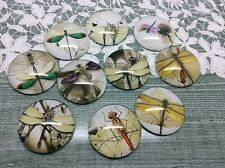 Dragonfly glass cabochon pictures 16mm in diameter make earring pendant charm