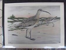 Original   Rex Brasher#265 Hand Colored Bird Print Hudsonian Curlew #265REX2 DSS
