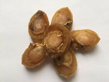 Dried seafood small-sized abalone 200 gram from South China Sea Nanhai