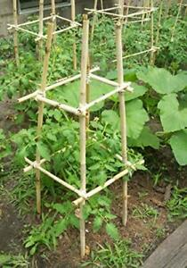 25 Bamboo Sticks Trellis Stakes 6 foot for Garden Plants Support Tomatoes Peas