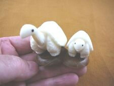 TNE-T-BOX-448-A) white Box Turtle pair Mama + Baby TAGUA NUT Figurine Vegetable