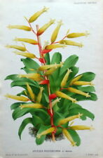 Lithograph Yellow Botanical Art Prints