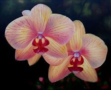 Quality Hand Painted Oil Painting Pink/Yellow Orchids 20x24in