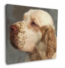 More details for clumber spaniel dog 12