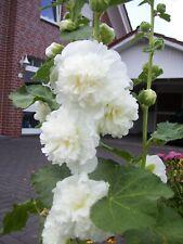 Blumensamen Set (15): 5 Stauden im Weiß und Schwarz aus eigenem BIO-Garten