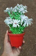 handmade flower pot | Made in Sri lanka