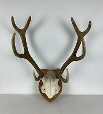 Großes Altes Hirschgeweih Rentier Geweih Knochen Vintage Antlers Deer Horns Bone