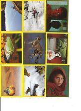 National Geographics Kids, il mondo in colore, FIDASS, Sticker, NUOVO