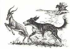 SALUKI - 1964 Dog Art Print - MATTED