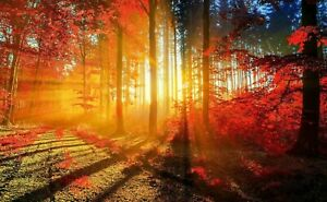 WOODLAND FOREST SUNRISE CANVAS PICTURE POSTER PRINT UNFRAMED 752