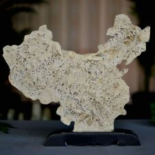 Trilobite Arthropod Trilobite fossil Yan Zishi From Taishan Mountain #623