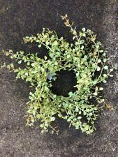 """10"""" MiNi WREATH FLORAL LT GREEN PEPPERGRASS PEPPER GRASS ARTIFICIAL GREENERY"""