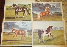 VINTAGE  HORSES Prints 1950's Wild COWBOY Western Throughbreed