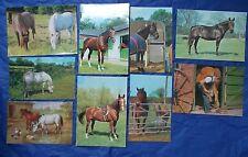 Horse & Pony Postcard Collection job lot bundle of 9 1970s & 1980s