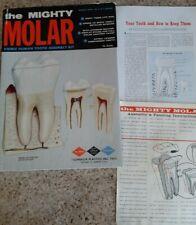 VINTAGE 1962 THE MIGHTY MOLAR PLASTIC DENTAL MODEL ANATOMICALLY CORRECT KIT used
