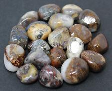 1 (One) Large 'A' Grade Pietersite Tumbled Stone (Crystal Healing Gemstone)