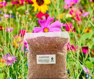 Blumenwiese Wildblumenwiese Samen 500 g Frische Saat für ca. 50 m²