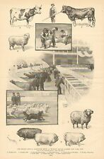NY Second Annual Live Stock Show, Madison Square Garden, 1896 Antique Art Print