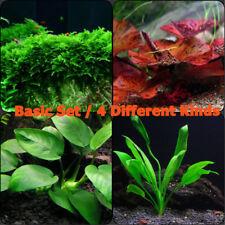 Live Aquarium Plants Basic Set Freshwater Aquarium Fish Tank Java Moss Anubias