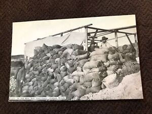 Early Postcard--NEVADA--Goldfield--St Ives Mine Near Third Chance--Men Bags NV