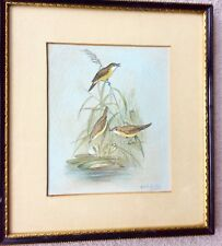Vintage Watercolour Painting Water Birds Signed Walter H.Austin. Royal Worcester