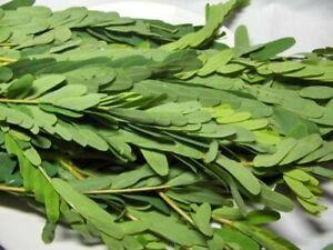 Dried Sesbania Leaves 100% Fresh Sri Lankan Home Made Kathurumurunga  -250g pack