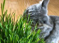 Katzengras - Vitamine für Katzen Grünfutter Gras Verdauungshilfe +100 Samen 😻
