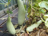 Armenian Long Cucumber / Snake Cucumber -  5 Seeds
