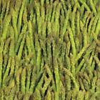 Asparagus Seeds 100+ Mary Washington Vegetable Garden NON-GMO USA FREE SHIPPING