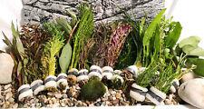 Aquariumpflanzen Set 15XXL Bunde, Aquarienpflanzen, Wasserpflanzen, Dicke Bunde