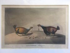 Cock Fighting Hand Coloured Engraving 1822 Mounted