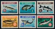 Albania 1964 MNH 6v, Fish, Shark, Marine Life - R19