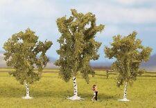 árboles de Noch N, Z (25520): 3 abedules