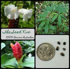 10+ CREPE GINGER SEEDS (Cheilocostus speciosus) Medicinal Ornamental Flower