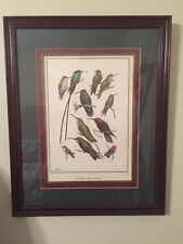 Don Eckelberry, CARIBBEAN HUMMINGBIRDS I LITHOGRAPH HAND SIGN FRAMED UNDER GLASS