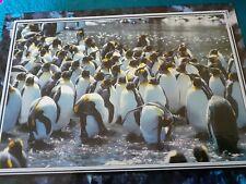 PENGUINS  Puzzle 750 Piece Jigsaw puzzle by Wonderful World Sealed