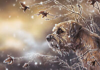 Frosty Border Terrier, dog Christmas cards pack of 10 by Paul Doyle C432x