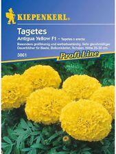 "Kiepenkerl  TAGETES "" Antigua Yellow F1 "" 3861 großblumig     ca. 50 Samen"