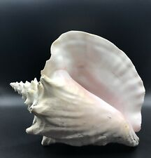 More details for vintage queen conch shell large