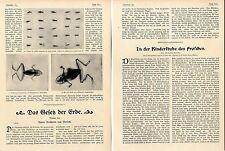 12 Röntgenbilder lebender Frösche ( Kinderstube des Frosches ) c.1904