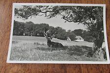 Vintage postcard Europe ? huge deer rack elk Copenhagen park