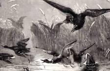 Eagle caza Original Buffon antiguo grabado impresión de Historia Natural