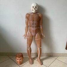 corpo umano modellismo Completo