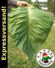 1000 Burley Tabak Samen ► Klasse A ◀  & ausf Anleitung, Keimgarantie, Zigaretten